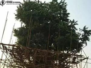 南昌水泥假树工程